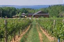 Jost, Gaspereau and Mercator Vineyards